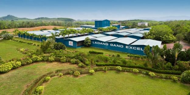 gano-excel-plantation